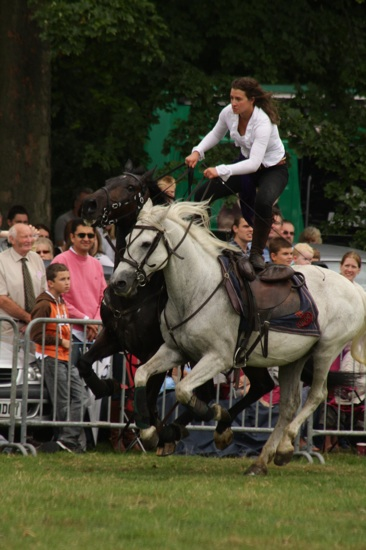 Canwell_Show_2010_Gallery_17