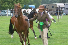 Canwell_Show_2011_Gallery_1