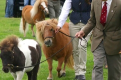 Canwell_Show_2011_Gallery_14