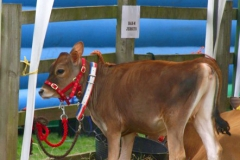 Canwell_Show_2011_Gallery_5
