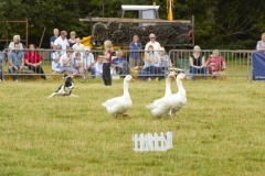 Canwell_Show_2013_Gallery_9